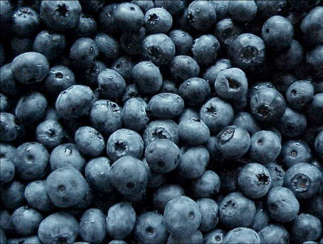 blueberries for brain power