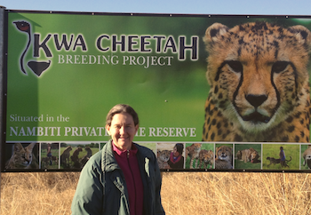 7 kwa cheetch breeding