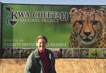 7 kwa cheetch breeding