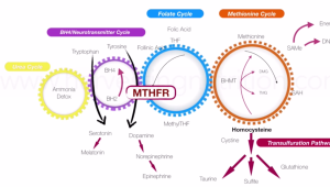 methylation pathways