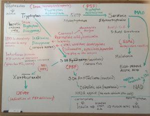 lidtke image serotonin biochemistry