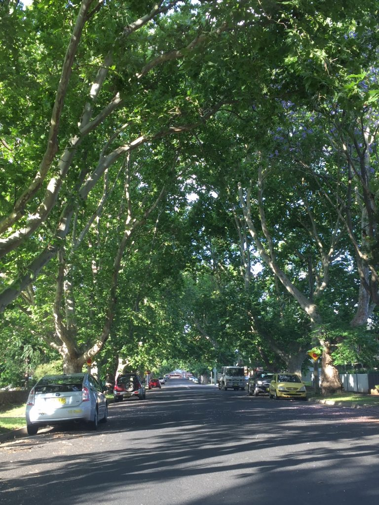 Tree-lined street stress-reducing